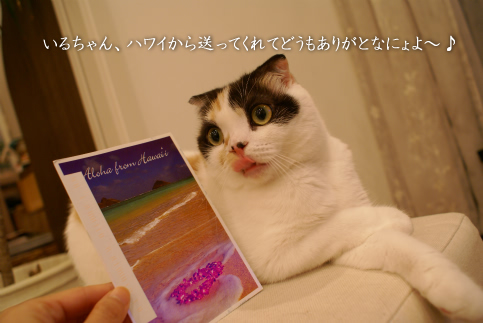 いるちゃんありがとう!.jpg