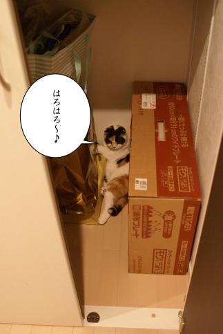 こむたんってば・・(^-^;).jpg