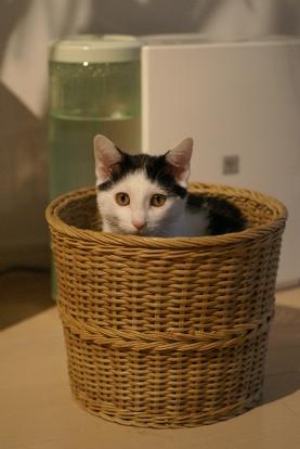 ごみばこ猫(^-^;).jpg