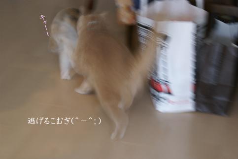 にげろー!.jpg