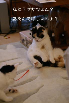 ねこじゃらし?.jpg