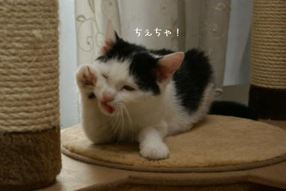 ぶちゃセサミン.jpg