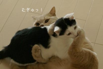 むぎゅ!.jpg