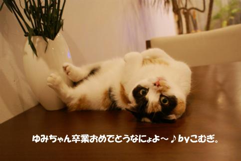 ゆみちゃんへ.jpg