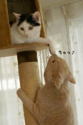 セサミの手にちゅ.jpg