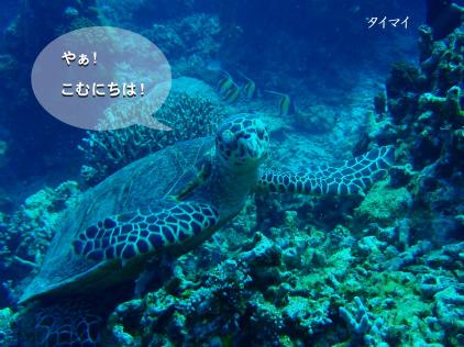 タイマイ(ウミガメの種類だよ♪).jpg