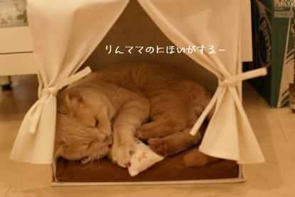 ヘンタイきびたん(^-^;).jpg