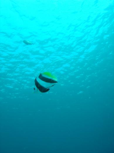 次回沖縄の海にご案内♪.jpg