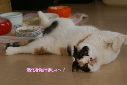 消化を助けましゅ~!.jpg