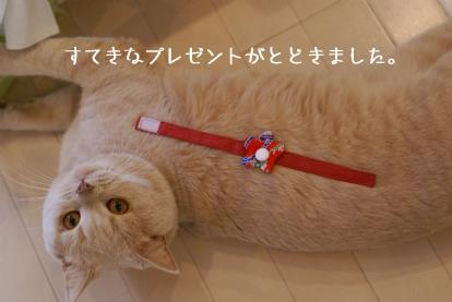 blueさん、ダイヤ猫乳母さんからです。.jpg