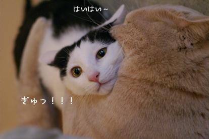 ぎゅ!.jpg