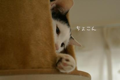 ちょこん.jpg
