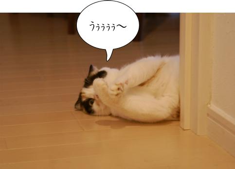 キメましゅ.jpg