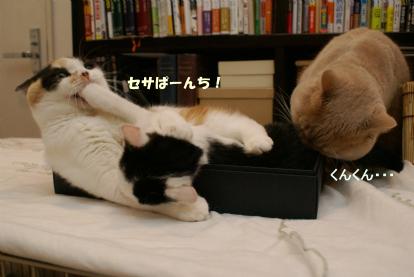 セサぱーんち.jpg