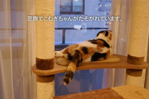 窓際こむたん.jpg